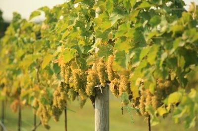 4 JG Winery